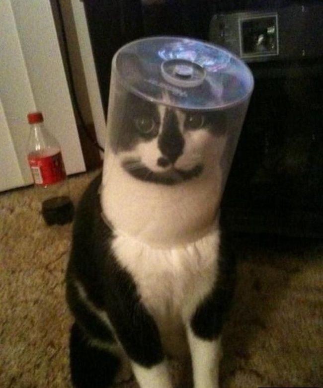Видео застрявшие коты