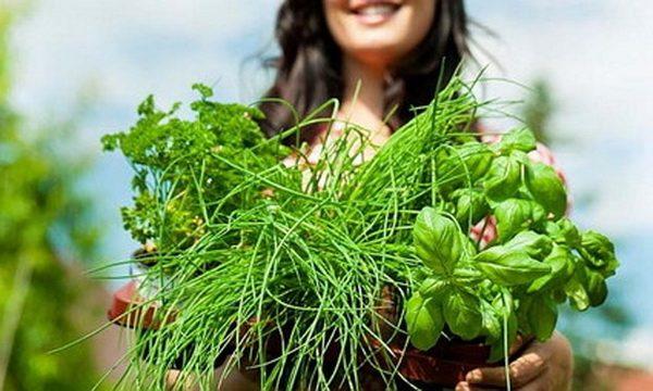 Как я похудела заваривала травы