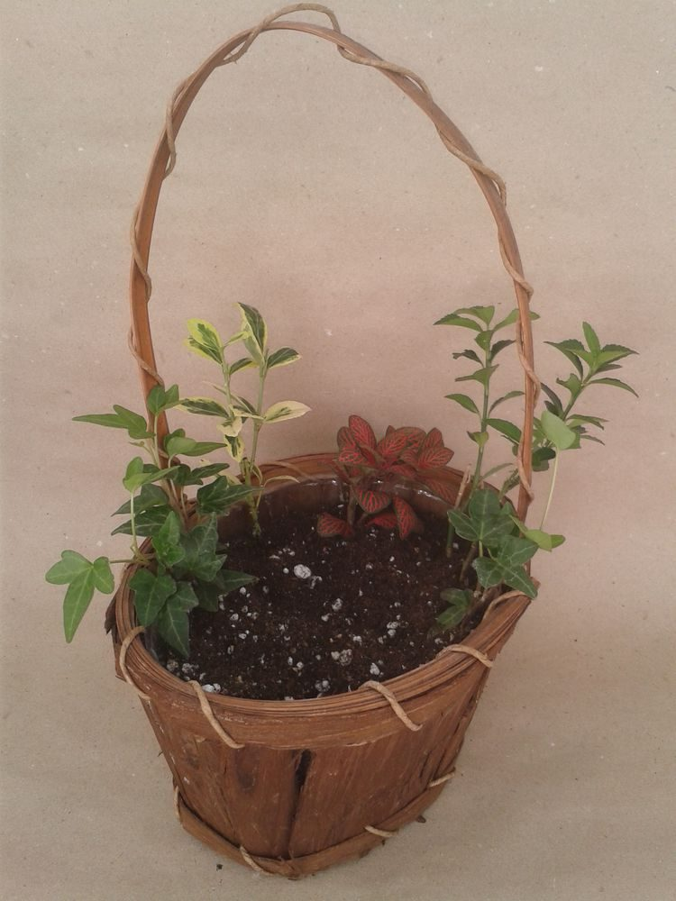 Міні сад в горщику своїми руками