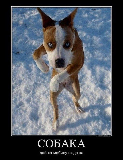 Картинки по запросу собаки фото
