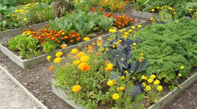 Посадка овощей с цветами