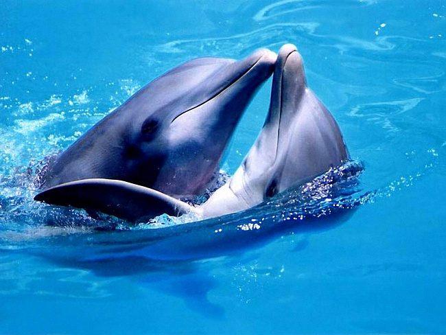 Занимается сексом для удовольствия люди и дельфины