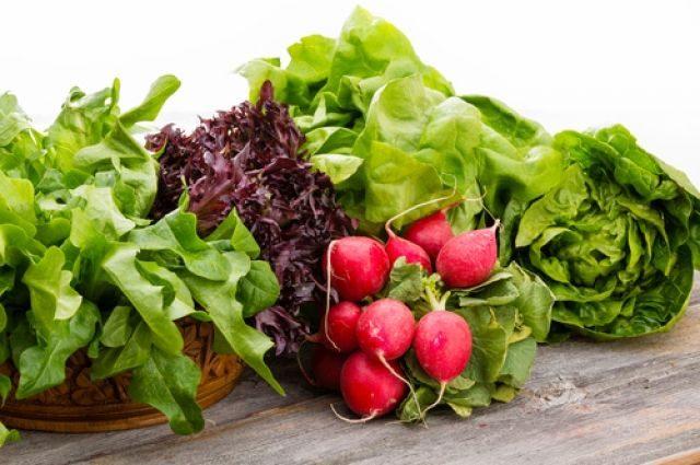 В чем польза зелени салата