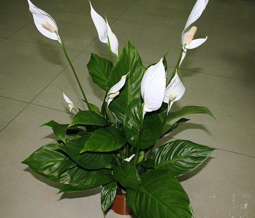 Суеверия и приметы про комнатные растения
