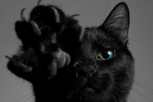 Приметы завести кота