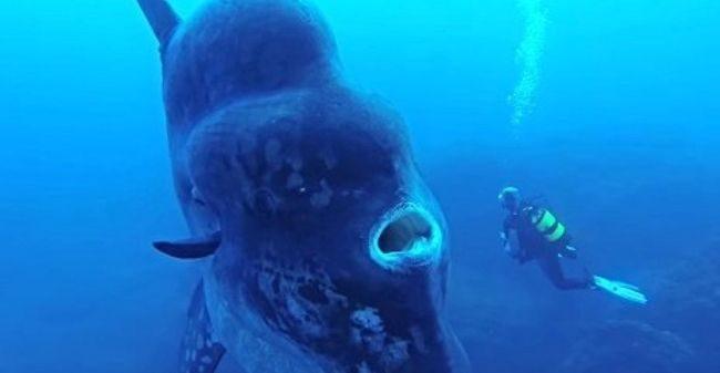 10 самых нереально больших животных. Реальность или Обман?