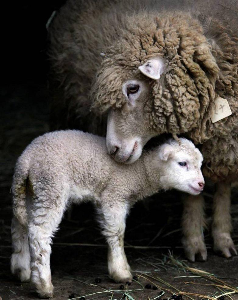 13 вдохновляющих фото о материнстве в животном мире