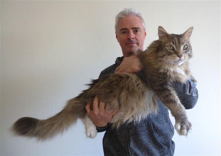20 гигантских котов, которые явно давным-давно перестали быть котятами