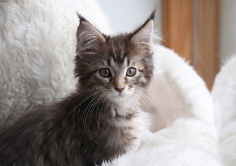 34140bac57 Кошка, которая помогла больной аутизмом девочке
