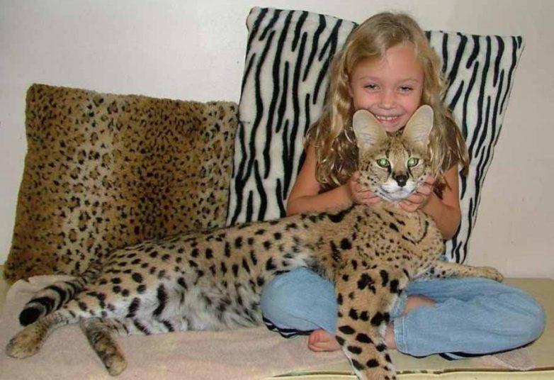 Породы котов самые крупные