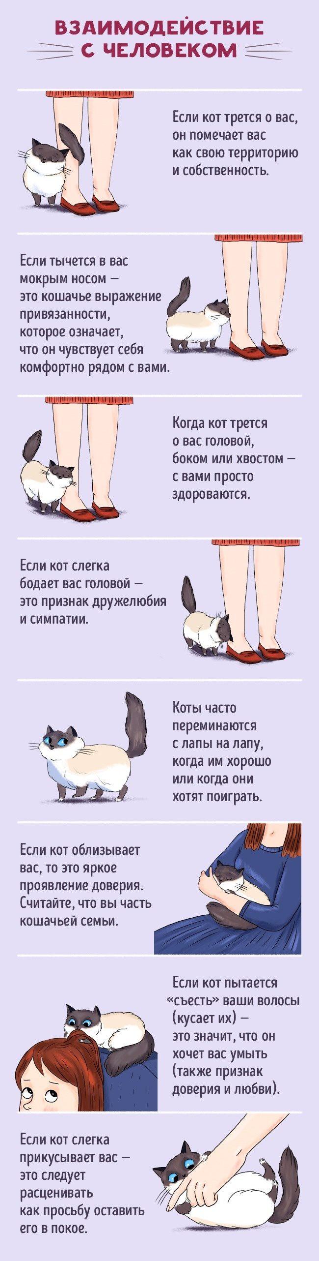 Как стать другом коту