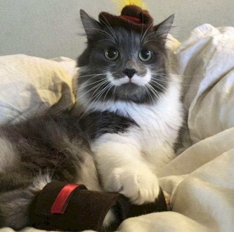 Необычного окраса коты