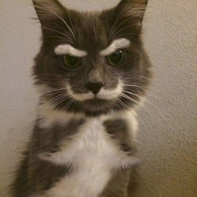 кошки необычного окраса фото