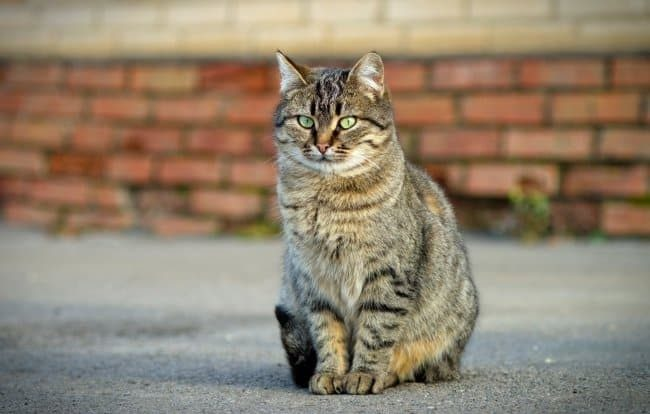 История про кота ваську