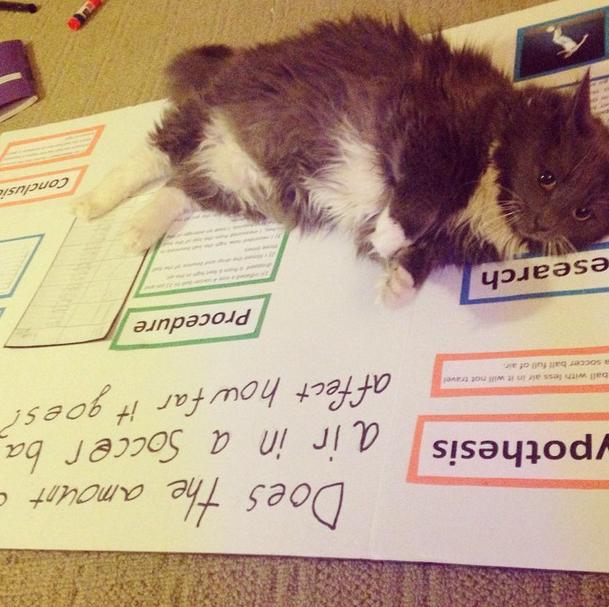 Любите ли вы кошек 4c26a903b6