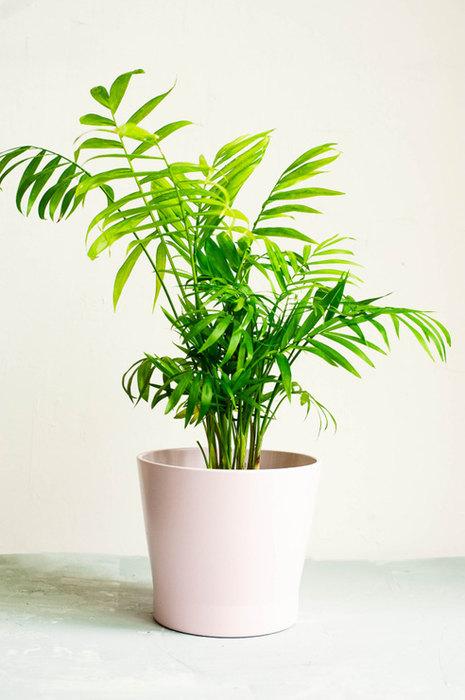 Комнатные растения, которым не нужно солнце