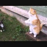 Ориентальная кошка: фото кошки, цена, описание породы
