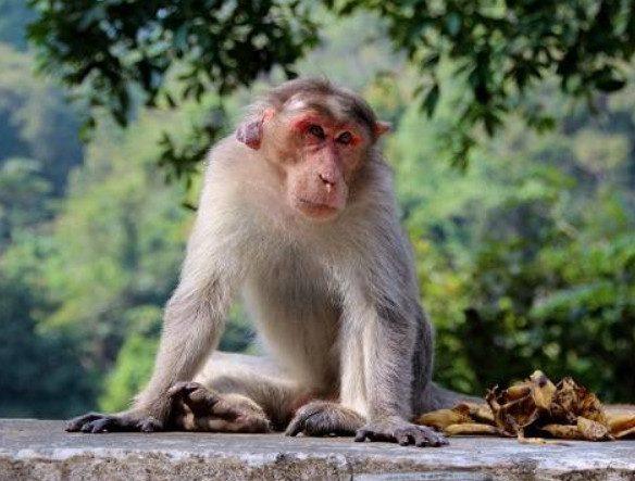 Учёные оценили опасность оспы обезьян для человека