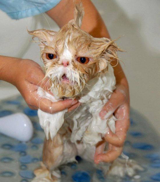 фотография мокрая кошка демотиватор биатлонистка трехкратная чемпионка