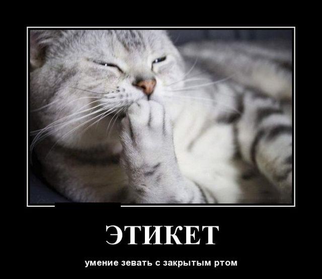 демотиваторы на тему кошек появилась