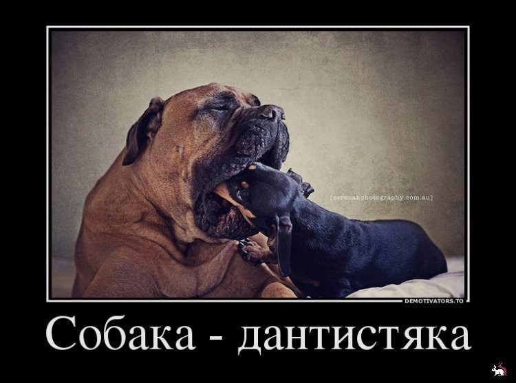 хочу собаку демотиватор функций