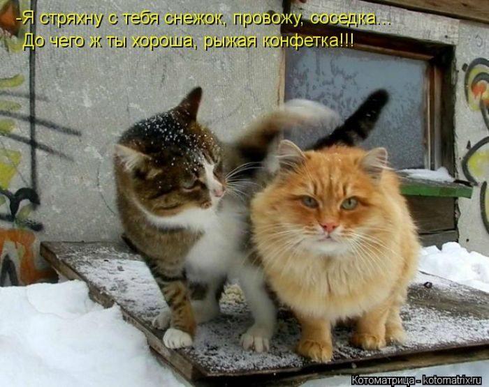 картинки котоматрица пятница рекомендую лазаревское