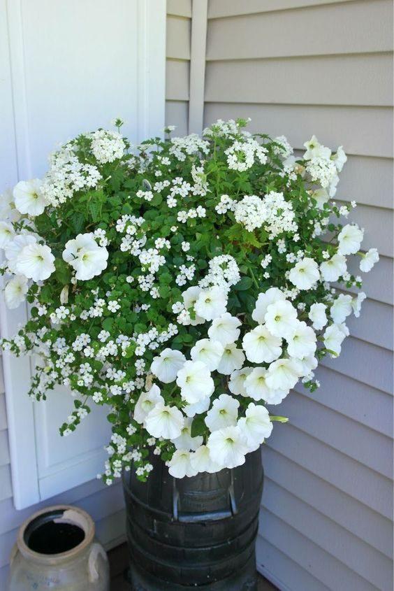 Красиво цветущие растения, которые отлично живут в горшках