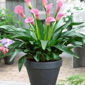 Комнатные растения на самый изысканный вкус
