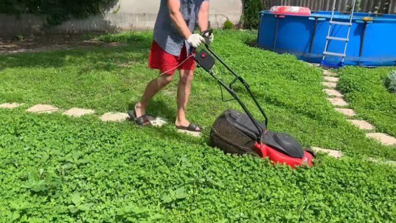 Идеальный газон для ленивых