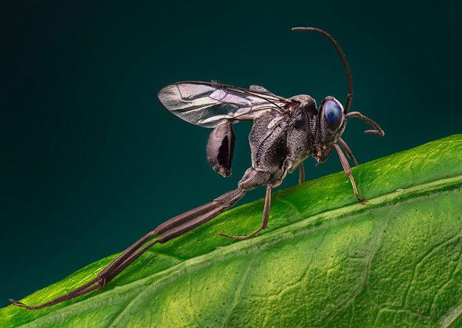 Гипнотизирующие макроснимки насекомых, которые позволяют взглянуть на них другими глазами
