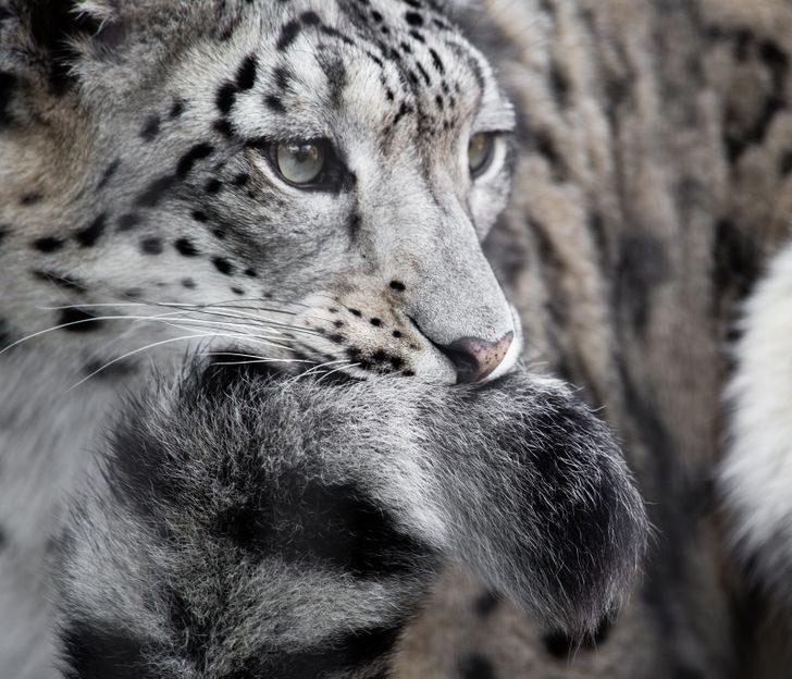 Ещё 9 поразительных снимков, демонстрирующих, что фантазия природы не знает границ