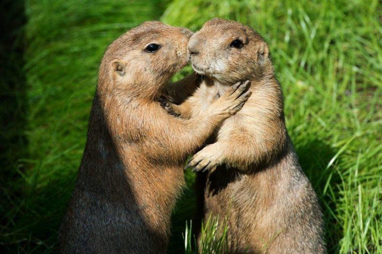 15 уникальных животных и их удивительные особенности