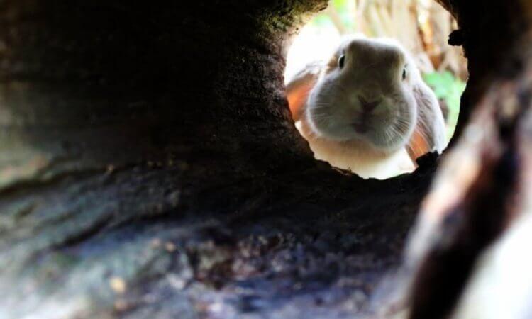 Кролики-археологи острова Скохольм