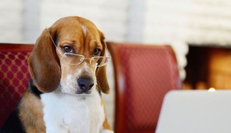 Как учёным удалось выяснить, что собаки умеют ревновать?