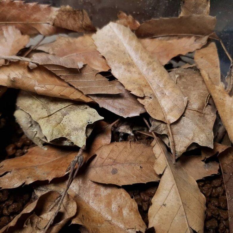 Лягушка — гений маскировки