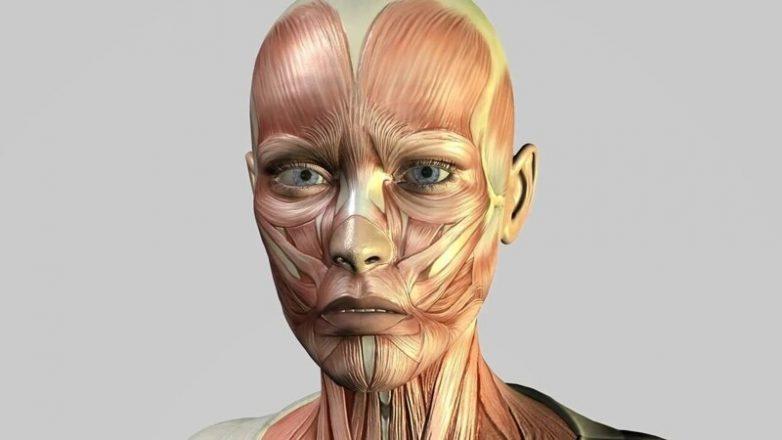 14 познавательных фактов о теле человека