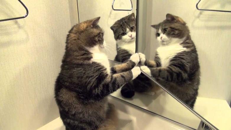 Зеркальный тест на интеллект