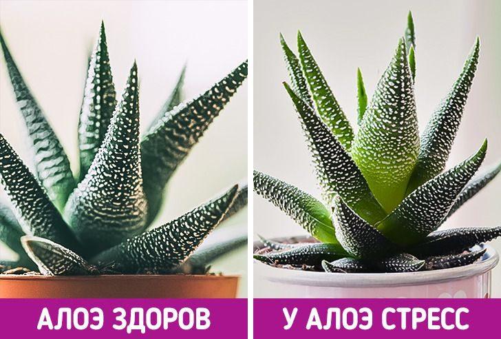 Ещё 7 потрясающих фактов о растениях, которые нам почему-то не рассказывали на биологии