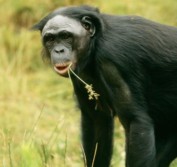 10 ошеломляющих фактов о животном мире, которые покруче всякого похода в зоопарк