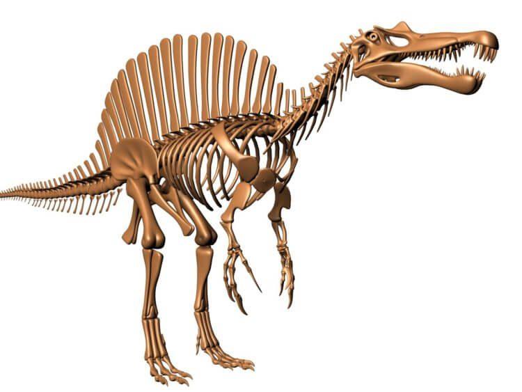 На острове Уайт найдены останки древнего спинозаврида