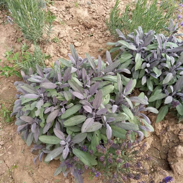 Какие травы помогут от кашля