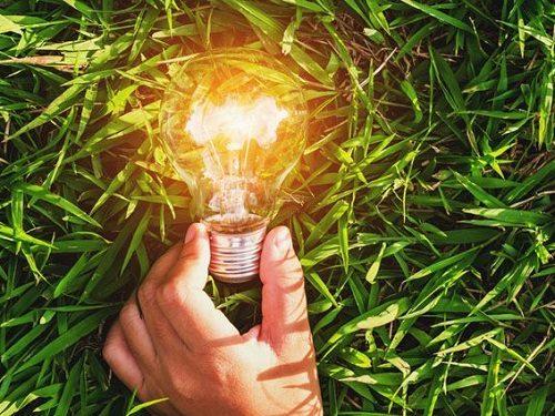 7 лучших трав для восстановления энергетики весной