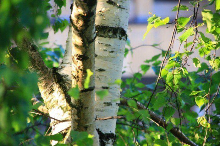 Как общаться с силами природы и получать от них помощь