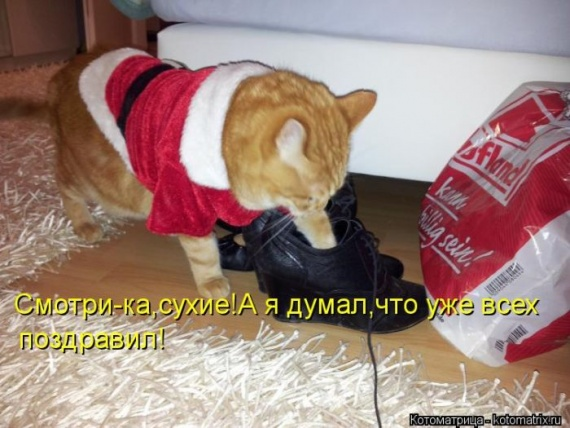 Смешные картинки с надписями до слез новый год
