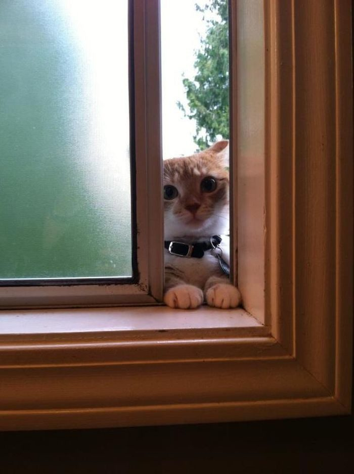 Кошка хочет домой картинки