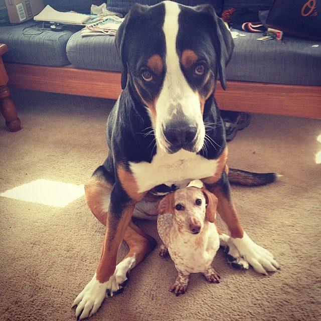 большая и маленькая собака фото достоинством торопясь, как