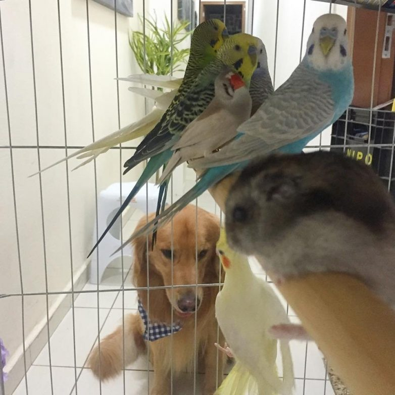 Картинки попугаев и хомяков