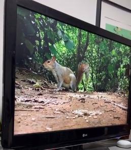 Так выглядит шок: смешная реакция собаки на белку в телевизоре