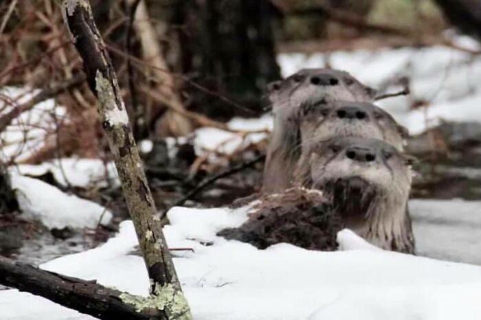 Уморительные фото диких зверей, которые они сами ни за что бы не выложили в Интернет