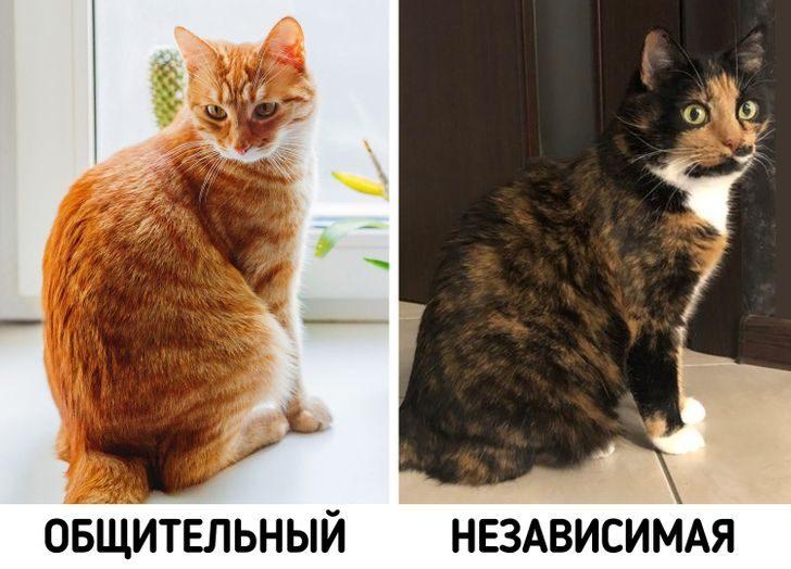 12 фактов, доказывающие, что над кошками природа поработала особенно тщательно